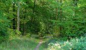 Randonnée Marche PIERREFONDS - en forêt de Compiègne_20_le Beaudon_bois de Damart_la Héronnière_bois du Bourgot - Photo 110