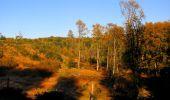 Randonnée Marche PIERREFONDS - en forêt de Compiègne_20_le Beaudon_bois de Damart_la Héronnière_bois du Bourgot - Photo 29