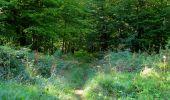 Randonnée Marche PIERREFONDS - en forêt de Compiègne_20_le Beaudon_bois de Damart_la Héronnière_bois du Bourgot - Photo 113