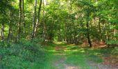 Randonnée Marche PIERREFONDS - en forêt de Compiègne_20_le Beaudon_bois de Damart_la Héronnière_bois du Bourgot - Photo 81