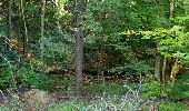 Randonnée Marche PIERREFONDS - en forêt de Compiègne_20_le Beaudon_bois de Damart_la Héronnière_bois du Bourgot - Photo 41
