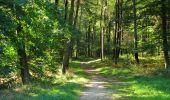 Randonnée Marche PIERREFONDS - en forêt de Compiègne_20_le Beaudon_bois de Damart_la Héronnière_bois du Bourgot - Photo 80