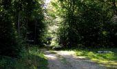 Randonnée Marche PIERREFONDS - en forêt de Compiègne_20_le Beaudon_bois de Damart_la Héronnière_bois du Bourgot - Photo 122