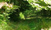 Randonnée Marche PIERREFONDS - en forêt de Compiègne_20_le Beaudon_bois de Damart_la Héronnière_bois du Bourgot - Photo 112