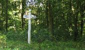 Randonnée Marche PIERREFONDS - en forêt de Compiègne_20_le Beaudon_bois de Damart_la Héronnière_bois du Bourgot - Photo 102