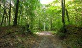 Randonnée Marche PIERREFONDS - en forêt de Compiègne_20_le Beaudon_bois de Damart_la Héronnière_bois du Bourgot - Photo 86