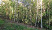 Randonnée Marche PIERREFONDS - en forêt de Compiègne_20_le Beaudon_bois de Damart_la Héronnière_bois du Bourgot - Photo 42
