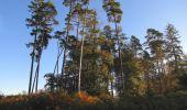 Randonnée Marche PIERREFONDS - en forêt de Compiègne_20_le Beaudon_bois de Damart_la Héronnière_bois du Bourgot - Photo 6