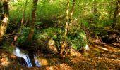 Randonnée Marche SAINT-JEAN-AUX-BOIS - en forêt de Compiègne_21_la Muette_les Clavières_la Brévière - Photo 83