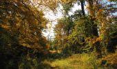 Randonnée Marche SAINT-JEAN-AUX-BOIS - en forêt de Compiègne_21_la Muette_les Clavières_la Brévière - Photo 105
