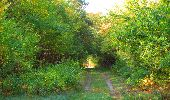 Trail Walk SAINT-JEAN-AUX-BOIS - en forêt de Compiègne_21_la Muette_les Clavières_la Brévière - Photo 44