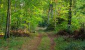 Randonnée Marche SAINT-JEAN-AUX-BOIS - en forêt de Compiègne_21_la Muette_les Clavières_la Brévière - Photo 9