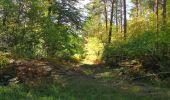 Trail Walk SAINT-JEAN-AUX-BOIS - en forêt de Compiègne_21_la Muette_les Clavières_la Brévière - Photo 117