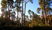 Trail Walk SAINT-JEAN-AUX-BOIS - en forêt de Compiègne_21_la Muette_les Clavières_la Brévière - Photo 56