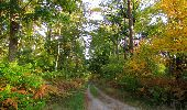 Randonnée Marche SAINT-JEAN-AUX-BOIS - en forêt de Compiègne_21_la Muette_les Clavières_la Brévière - Photo 140