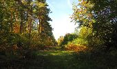 Randonnée Marche SAINT-JEAN-AUX-BOIS - en forêt de Compiègne_21_la Muette_les Clavières_la Brévière - Photo 124