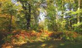 Randonnée Marche SAINT-JEAN-AUX-BOIS - en forêt de Compiègne_21_la Muette_les Clavières_la Brévière - Photo 113