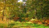 Trail Walk SAINT-JEAN-AUX-BOIS - en forêt de Compiègne_21_la Muette_les Clavières_la Brévière - Photo 29