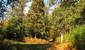 Trail Walk SAINT-JEAN-AUX-BOIS - en forêt de Compiègne_21_la Muette_les Clavières_la Brévière - Photo 86