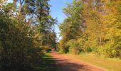 Randonnée Marche SAINT-JEAN-AUX-BOIS - en forêt de Compiègne_21_la Muette_les Clavières_la Brévière - Photo 130