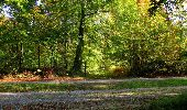 Randonnée Marche SAINT-JEAN-AUX-BOIS - en forêt de Compiègne_21_la Muette_les Clavières_la Brévière - Photo 70