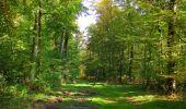 Trail Walk SAINT-JEAN-AUX-BOIS - en forêt de Compiègne_21_la Muette_les Clavières_la Brévière - Photo 49