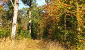 Randonnée Marche SAINT-JEAN-AUX-BOIS - en forêt de Compiègne_21_la Muette_les Clavières_la Brévière - Photo 99
