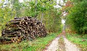 Trail Walk SAINT-JEAN-AUX-BOIS - en forêt de Compiègne_22_la Muette_le Mont Arcy_le Fort Poirier - Photo 102