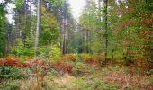 Trail Walk SAINT-JEAN-AUX-BOIS - en forêt de Compiègne_22_la Muette_le Mont Arcy_le Fort Poirier - Photo 110