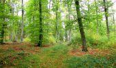 Trail Walk SAINT-JEAN-AUX-BOIS - en forêt de Compiègne_22_la Muette_le Mont Arcy_le Fort Poirier - Photo 108
