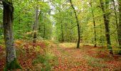 Trail Walk SAINT-JEAN-AUX-BOIS - en forêt de Compiègne_22_la Muette_le Mont Arcy_le Fort Poirier - Photo 89
