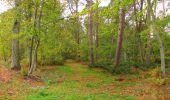 Trail Walk SAINT-JEAN-AUX-BOIS - en forêt de Compiègne_22_la Muette_le Mont Arcy_le Fort Poirier - Photo 41