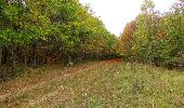 Trail Walk SAINT-JEAN-AUX-BOIS - en forêt de Compiègne_22_la Muette_le Mont Arcy_le Fort Poirier - Photo 33