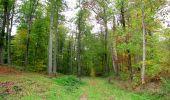Trail Walk SAINT-JEAN-AUX-BOIS - en forêt de Compiègne_22_la Muette_le Mont Arcy_le Fort Poirier - Photo 99