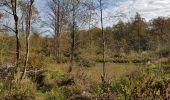 Randonnée Marche Hotton - Fronville - Monteuville - Petihan - Photo 12