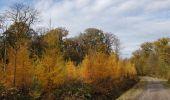 Randonnée Marche Hotton - Fronville - Monteuville - Petihan - Photo 8