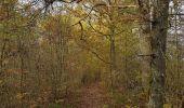 Randonnée Marche Hotton - Fronville - Monteuville - Petihan - Photo 5