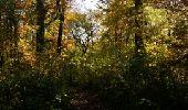 Randonnée Marche Somme-Leuze - NETTINE ... le Bois de Champaille et son parcours santé. - Photo 5