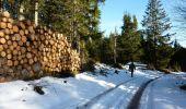 Randonnée Marche LES NOES - Nouvelle Piste Forestière entre le Rocher de Rochefort et le Plan du Grand Jonc - Photo 2