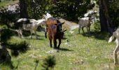 Trail Walk ARAGNOUET - Le soum de Monpelat par les laquettes (Néouvielle) - Photo 4