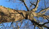 Randonnée Marche Tervuren - Tervuren Leefdaal 22 km - Photo 10