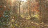 Trail Walk FOURMIES - Les étangs des Moines - Fourmies - Photo 1