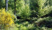 Trail Walk ENGLEFONTAINE - Circuit du Saint - Georges à Mormal - Englefontaine - Photo 3