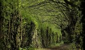 Trail Walk PREUX-AU-BOIS - Circuit de Preux - au - Bois - Photo 3