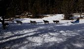Trail Snowshoes ALBIES - plateau de beille - Photo 5