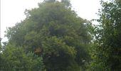 Randonnée Marche Gesves - GESVES -Mozet- N°06- Biodiversité - Photo 12