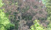 Randonnée Marche Gesves - GESVES -Mozet- N°06- Biodiversité - Photo 21