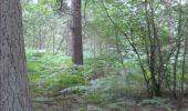 Trail Walk Gesves - GESVES- Le Pré D'Amite- N°07- Bois  - Photo 34