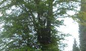Trail Walk Gesves - GESVES- Le Pré D'Amite- N°07- Bois  - Photo 3