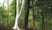 Trail Walk Gesves - GESVES- Le Pré D'Amite- N°07- Bois  - Photo 20